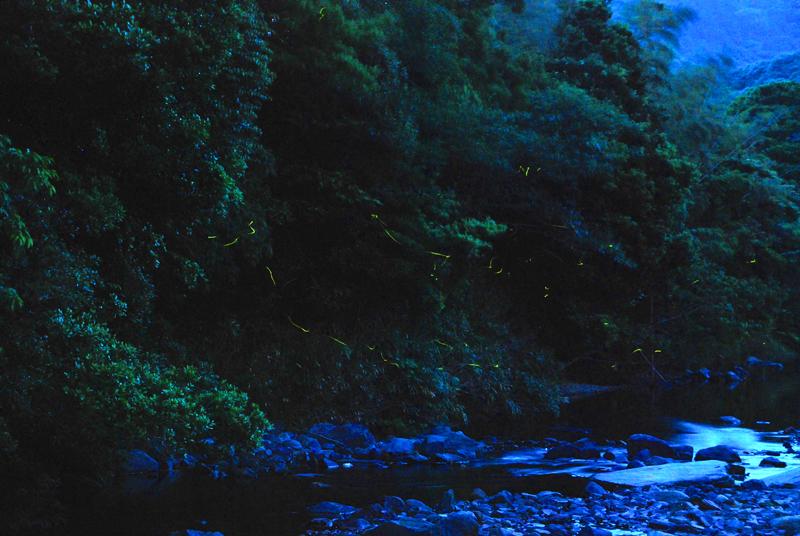 ホタルの画像 p1_17