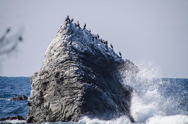 海鵜のコロニー